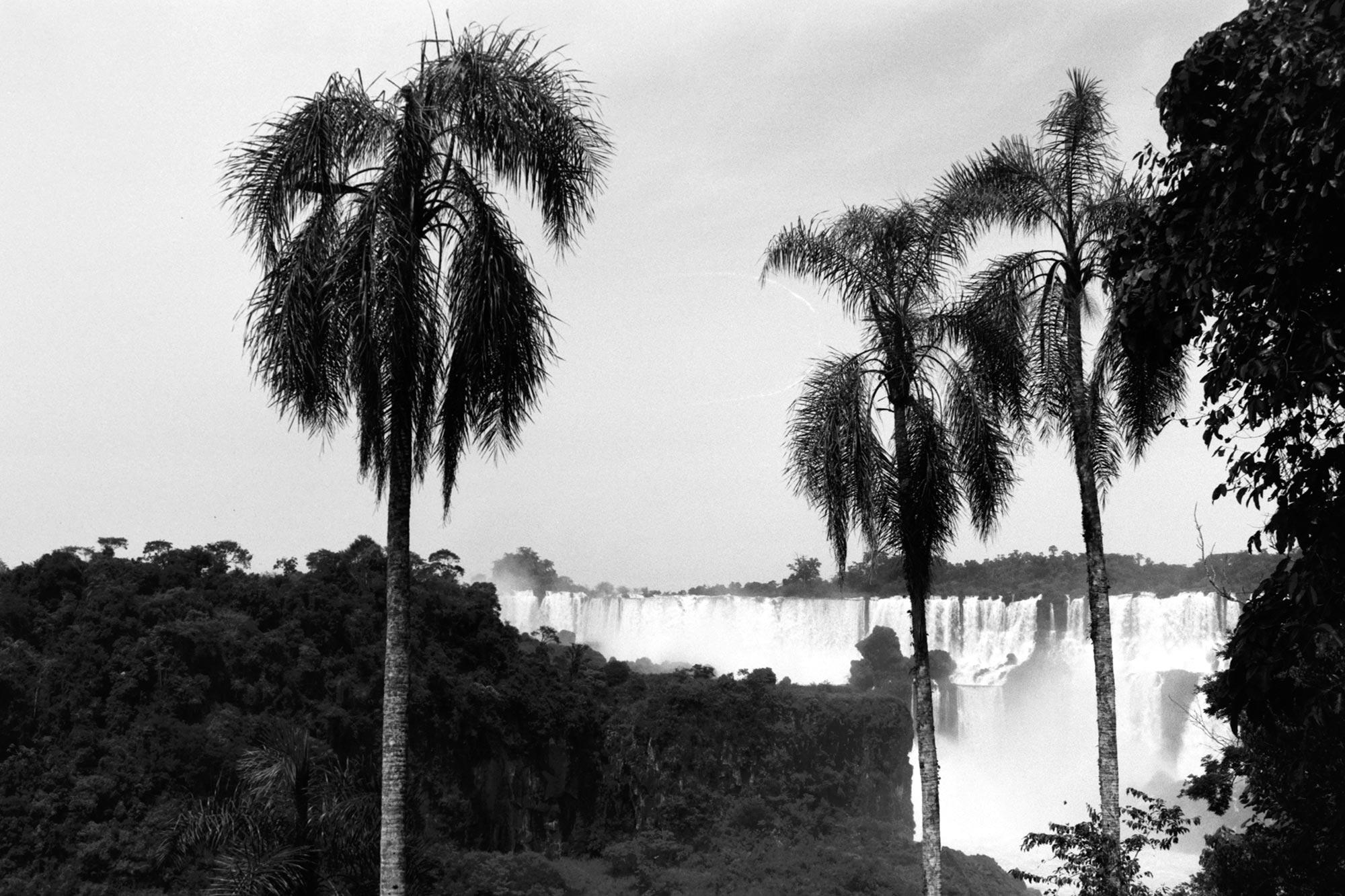 iguazu falls national park palm