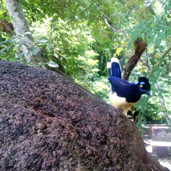 Iguazu falls national park bird blue yellow