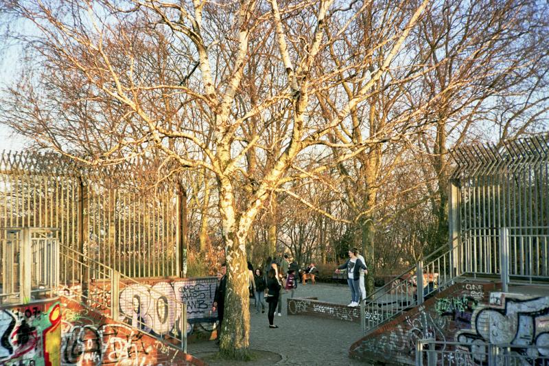Berlin humbholdthain trees