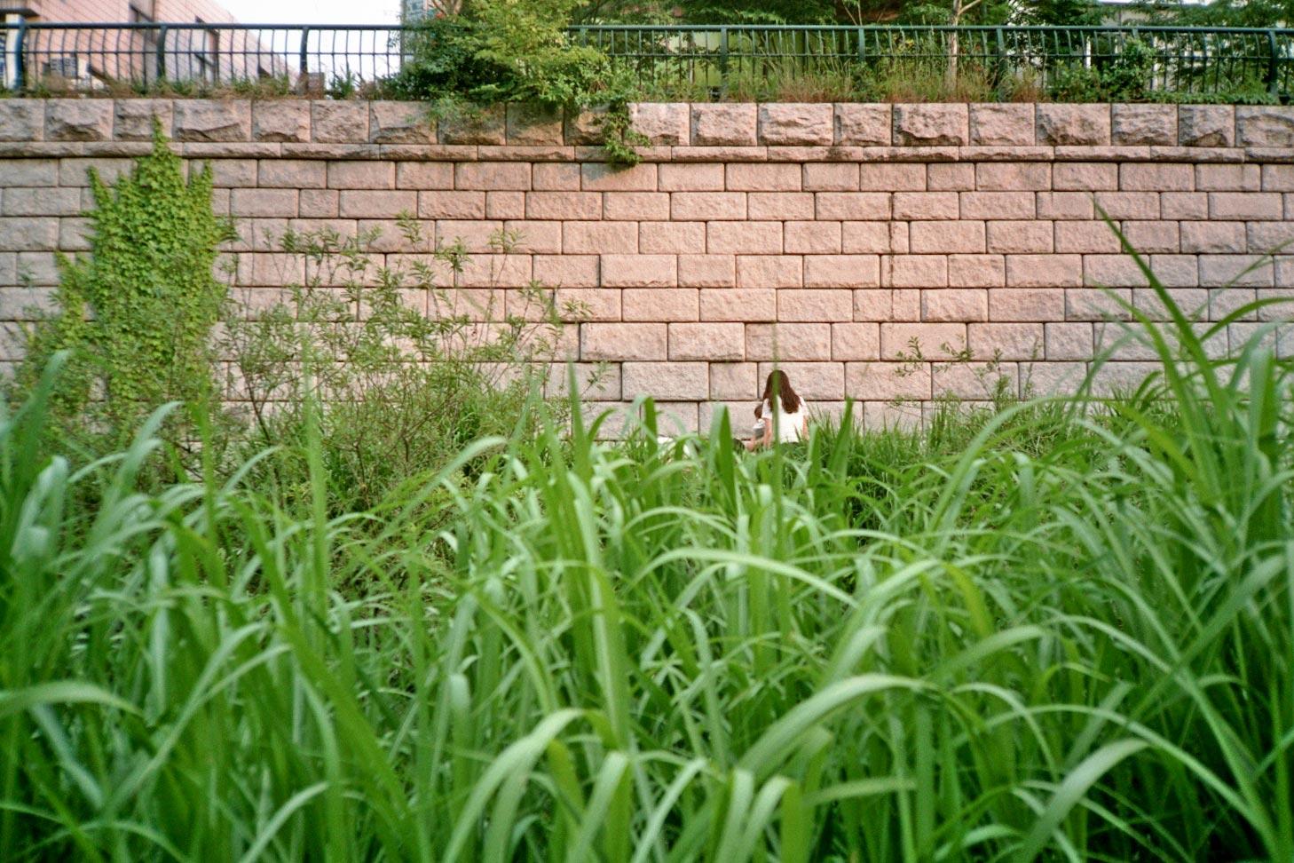 IMG_IMG_South Korea Seoul Cheonggyecheon grass