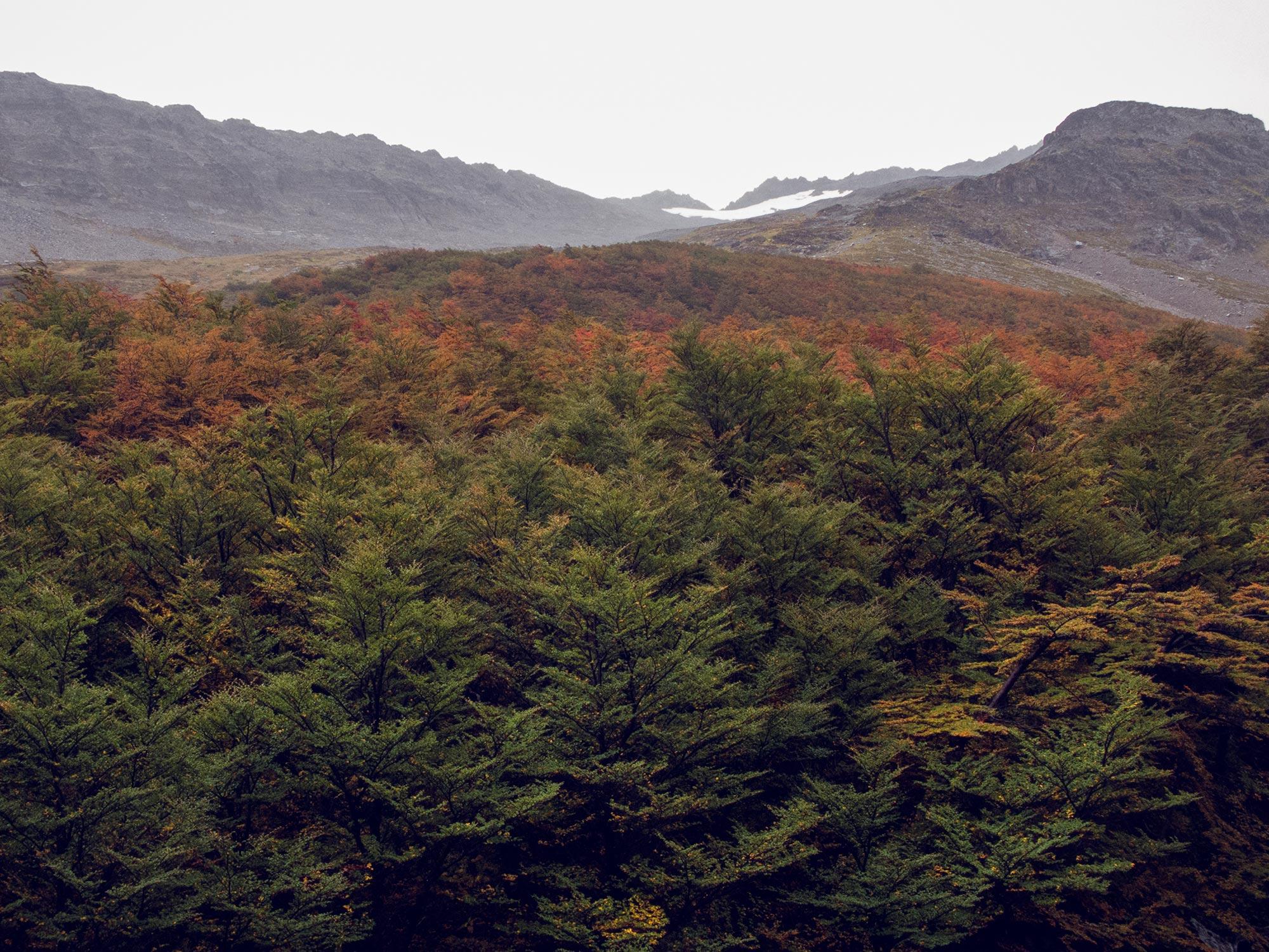 Argentin Ushuaia Glacia Martial autumn colors trees