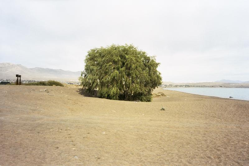 Argentina Patagonia Calafate Lago Argentino tree