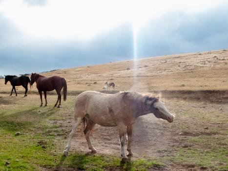 Argentina Patagonia Calafate Lago Roca beautiful horse
