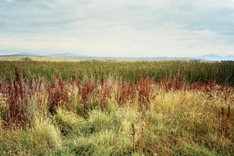 Argentina Patagonia Calafate Laguna Nimez colors