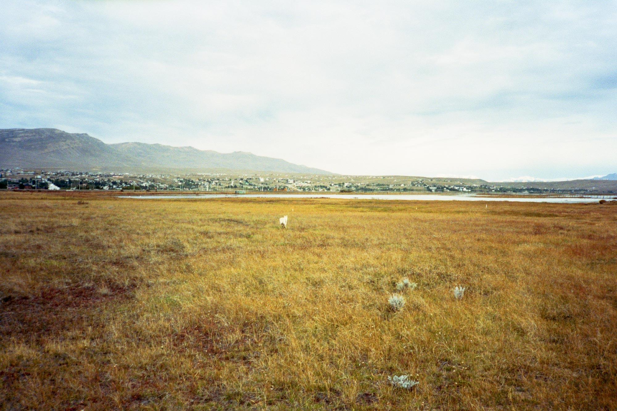 Argentina Patagonia Calafate Laguna Nimez dog