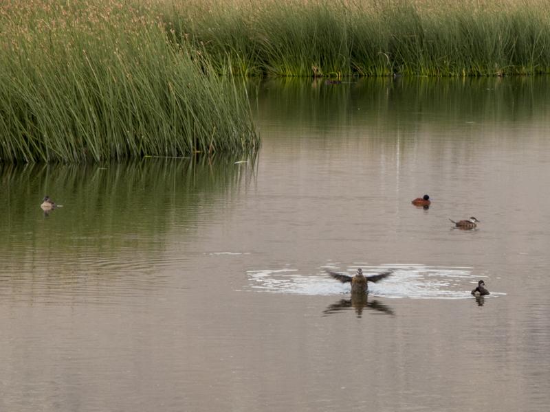 Argentina Patagonia Calafate Laguna Nimez horse birds