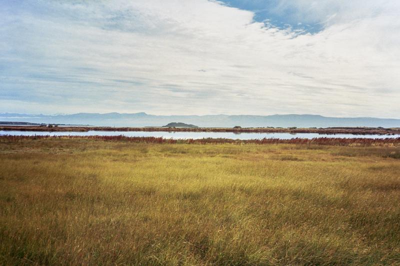 Argentina Patagonia Calafate Laguna Nimez yellow