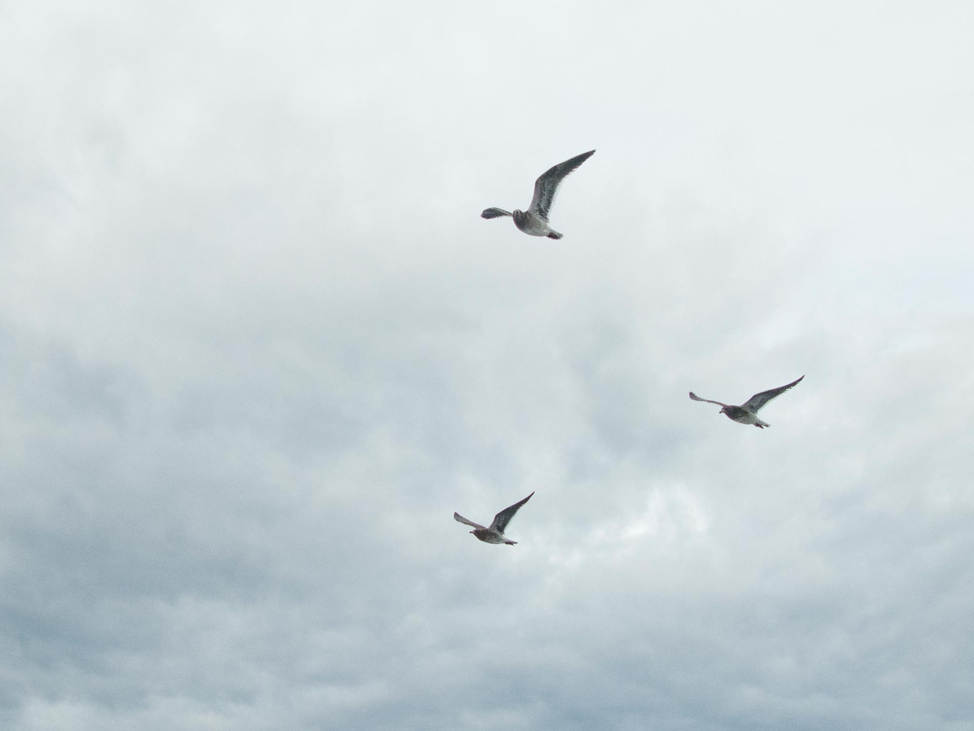 Argentina Ushuaia beagle channel birds