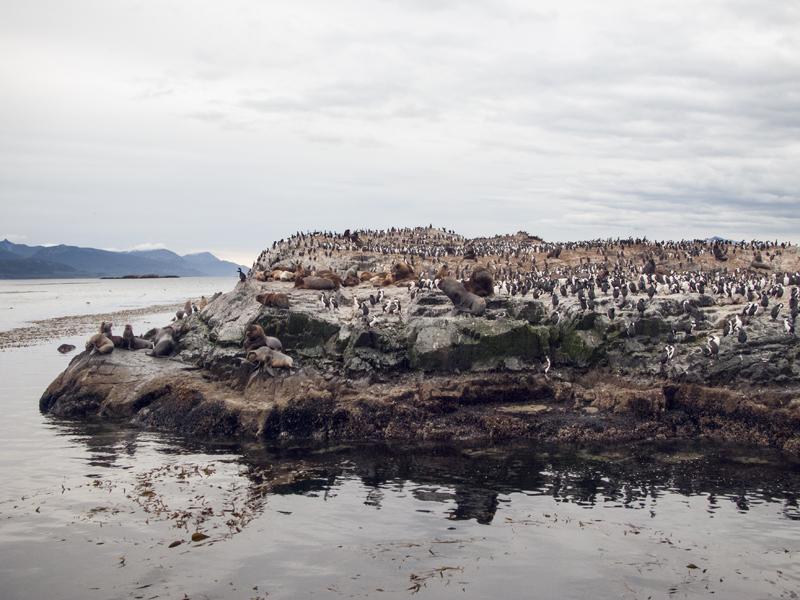 Argentina ushuaia beagle channel ferry isla de los lobos