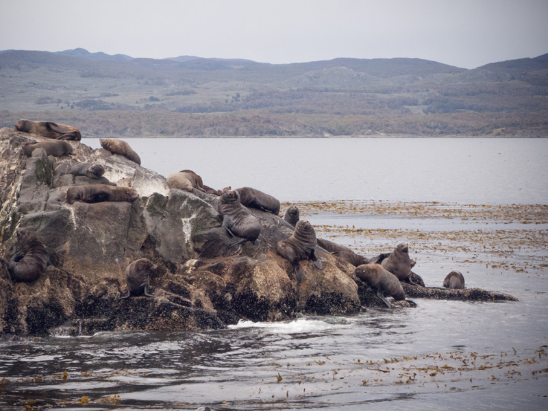 Argentina ushuaia beagle channel ferry isla de los lobos sea lions