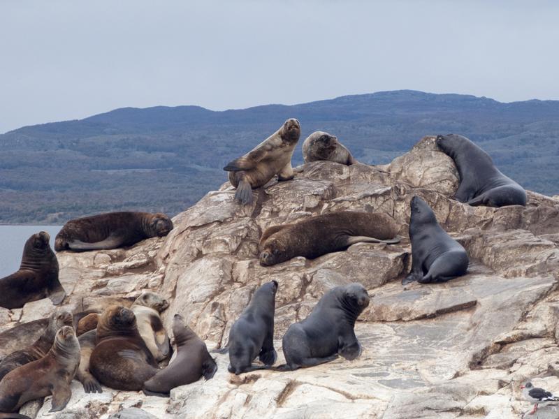 Argentina ushuaia beagle channel ferry isla de los lobos sea lion looking