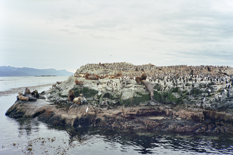 Argentina Ushuaia Beagle Channel isla lobos sea lions left