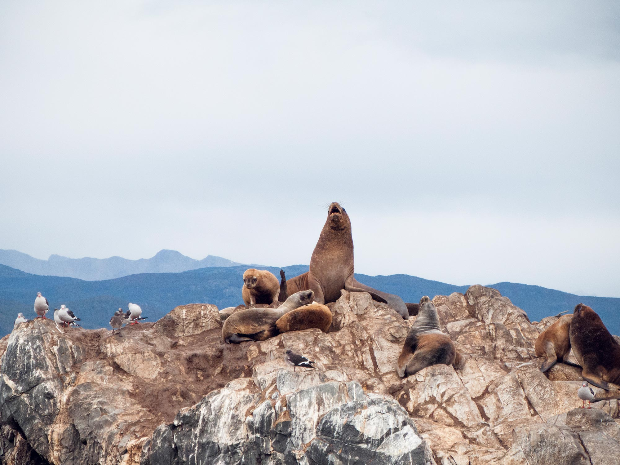Argentina Ushuaia beagle channel isla lobos sealion royal