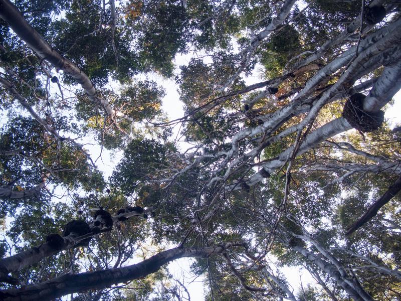 Argentina ushuaia national park tierra del fuego trees