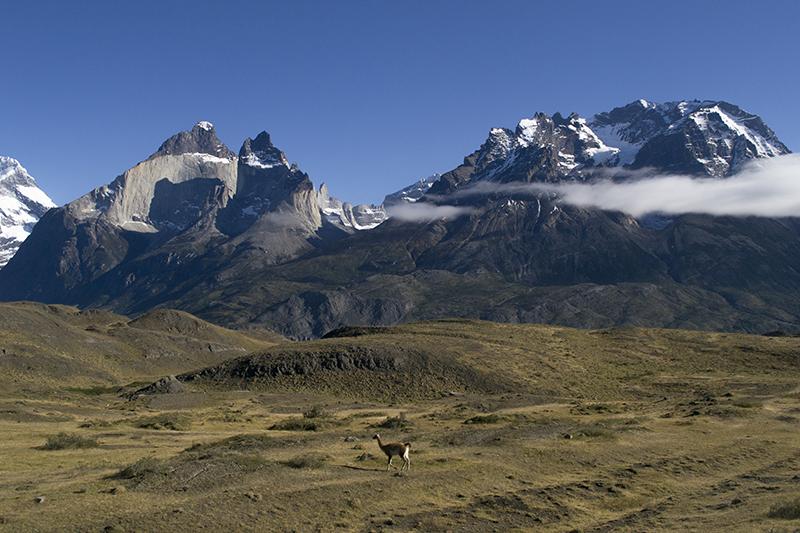 Chile Patagonia Torres del Paine pudeto guanaco