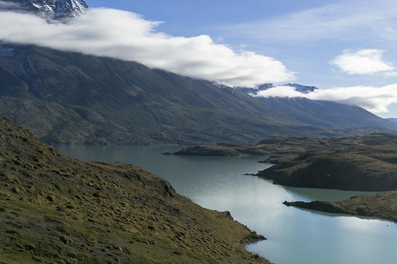 Chile Patagonia Torres del Paine pudeto