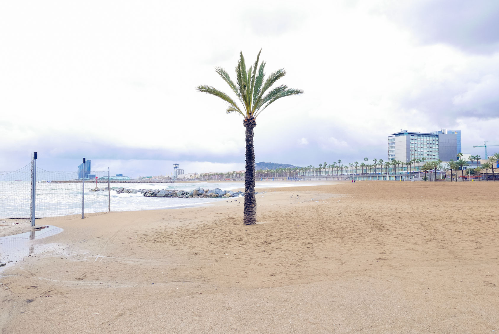 Spain Barcelona beach barceloneta palm