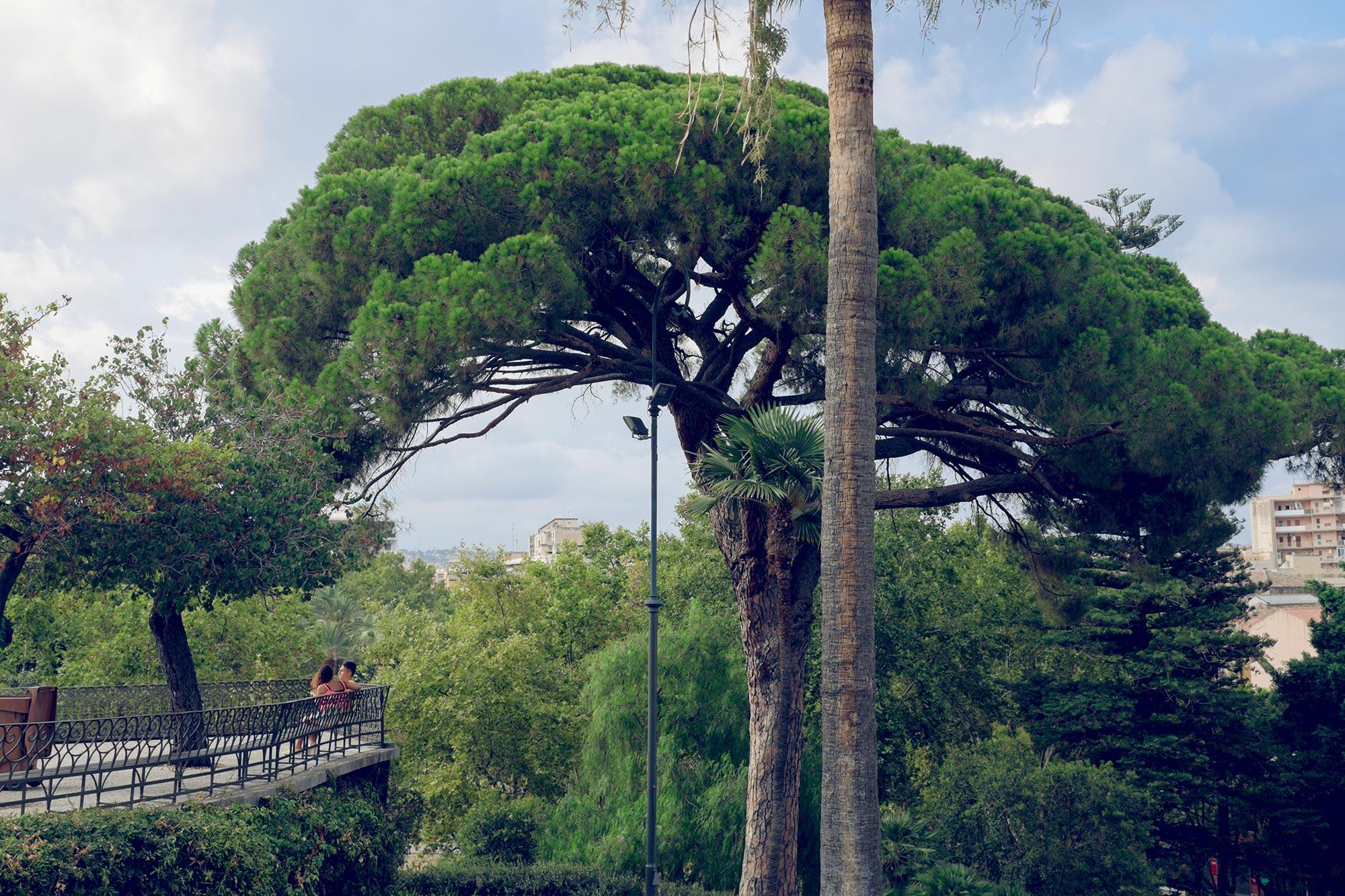 italy-sicilia-catania-giardino-bellini-tree
