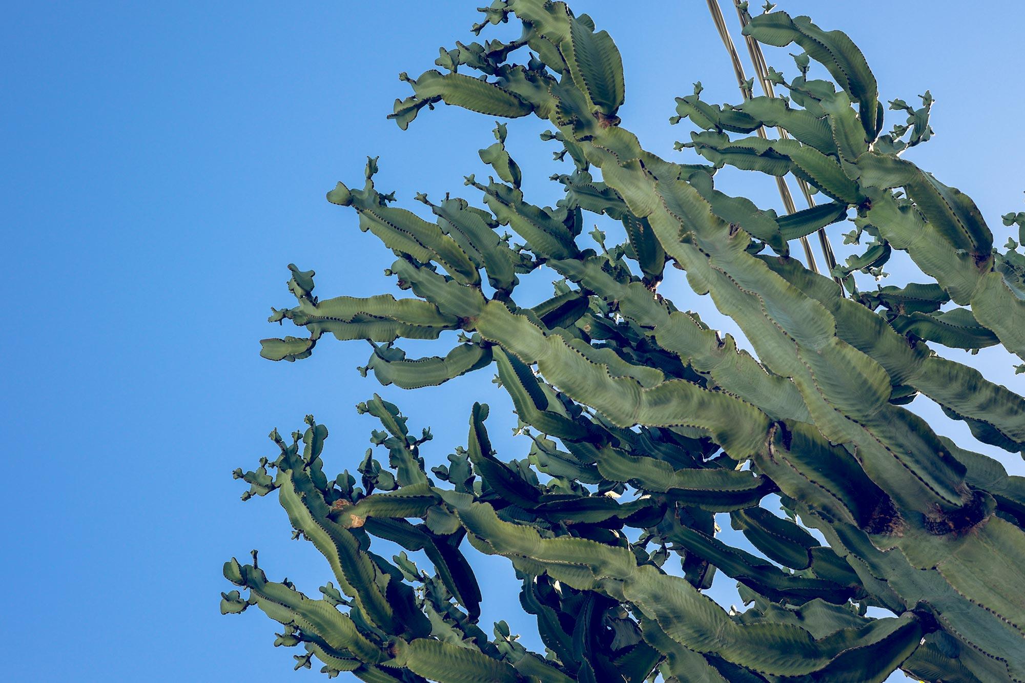 italy-sicilia-eolie-stromboli-cactus
