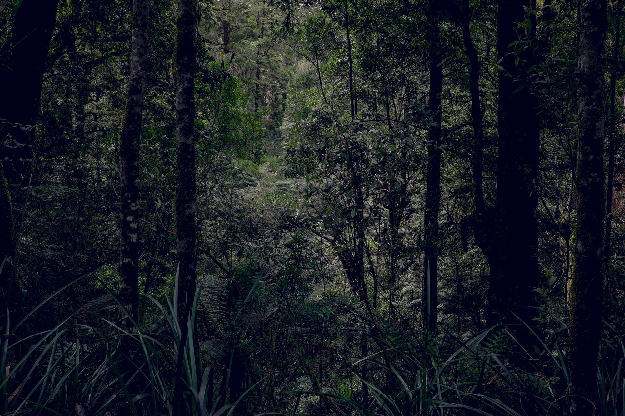australia-melbourne-great-ocean-road-maits-rest1
