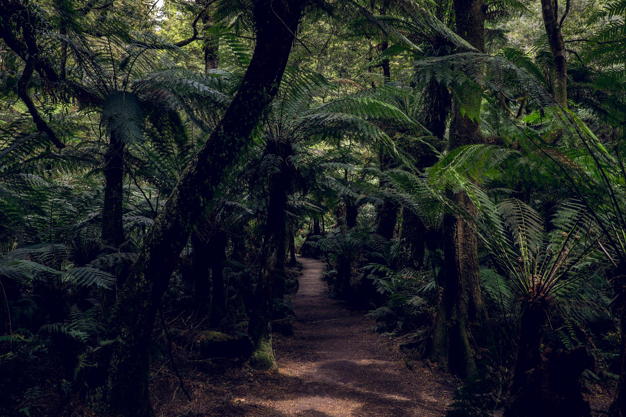 australia-melbourne-great-ocean-road-maits-rest6