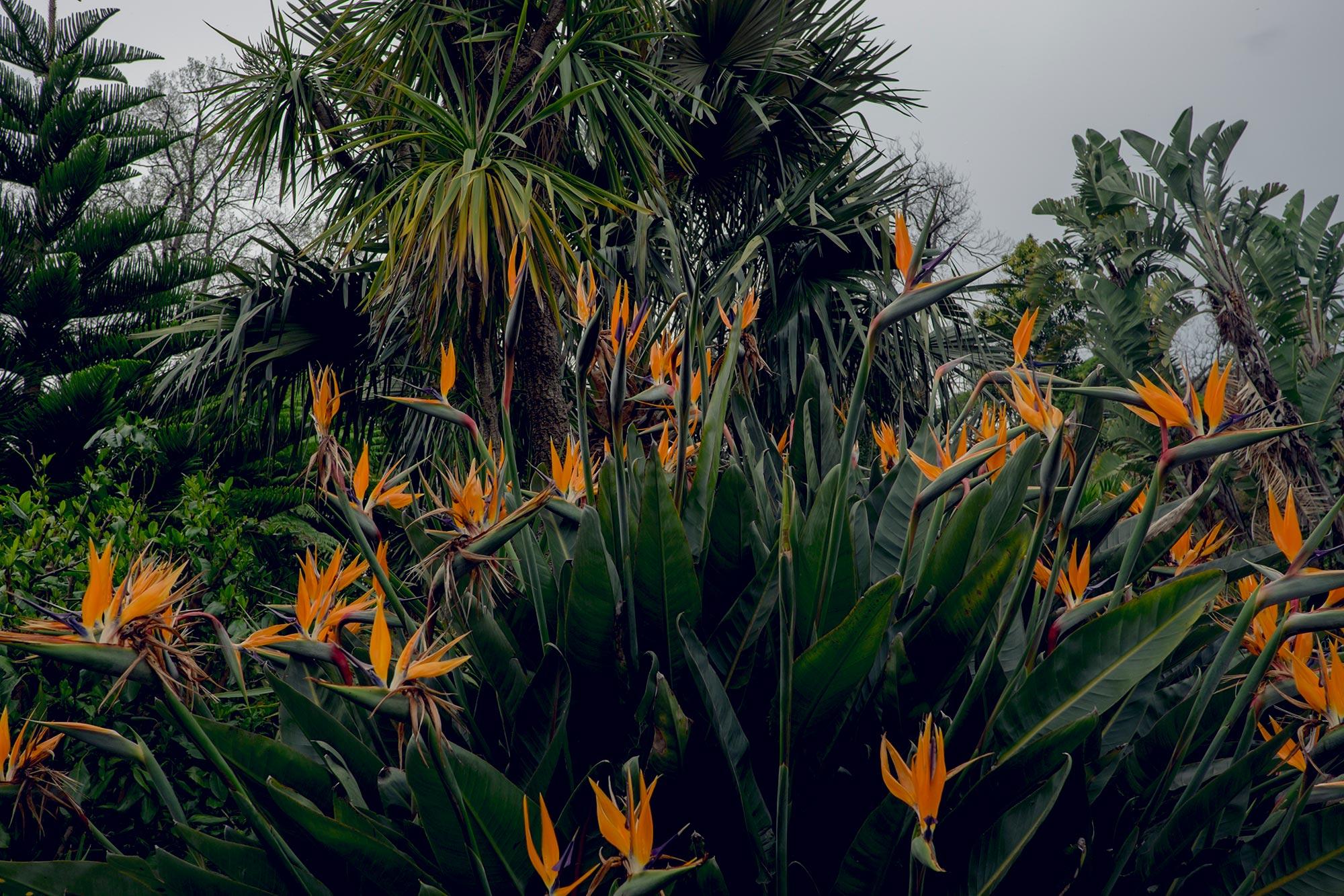 australia-melbourne-royal-botanic-gardens3