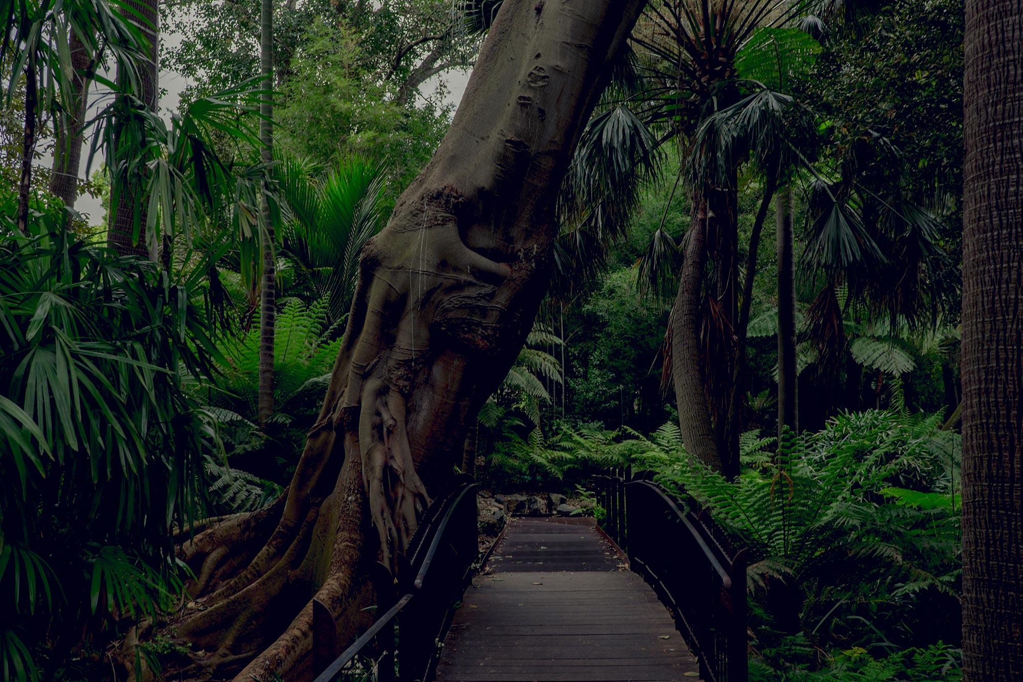 australia-melbourne-royal-botanic-gardens6