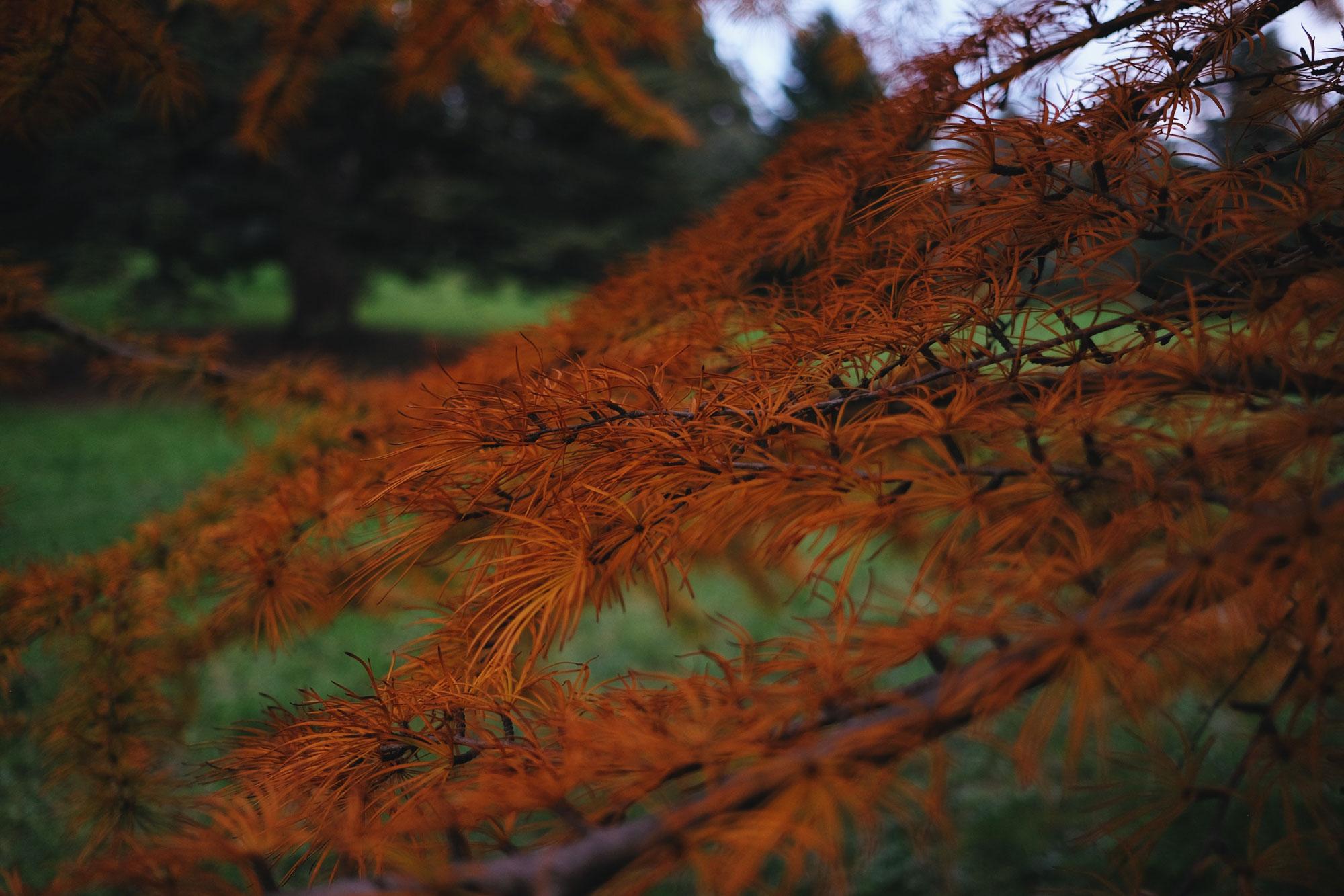 2017_Boston_Arboretum_Foliage1
