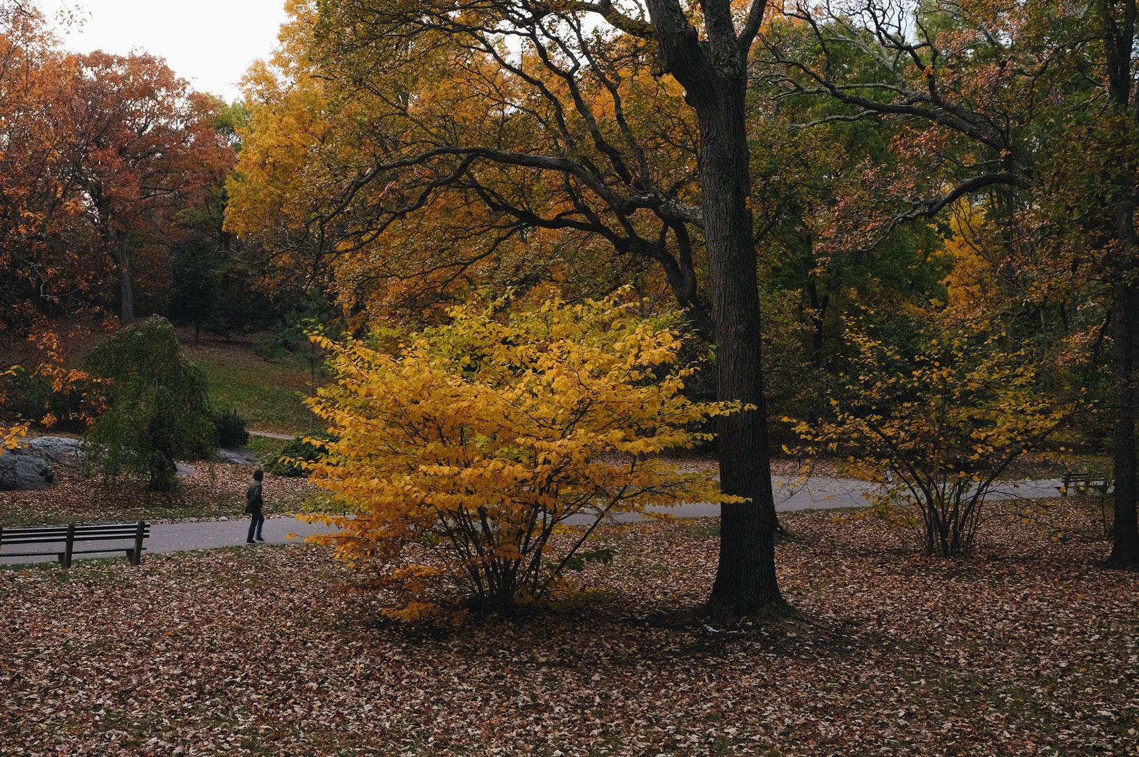 2017_Boston_Arboretum_Foliage13