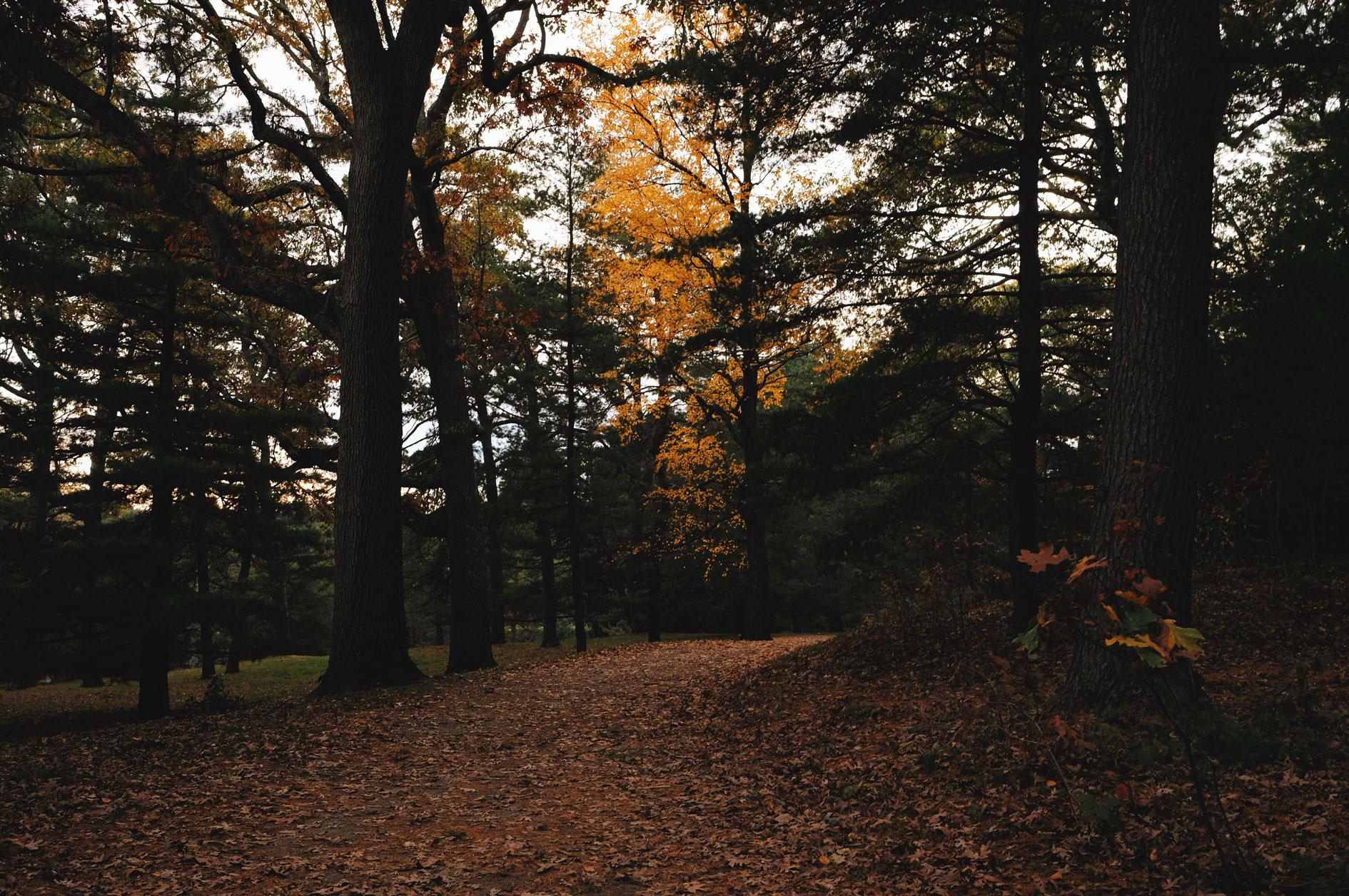 2017_Boston_Arboretum_Foliage3